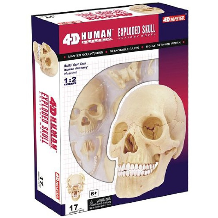 4d Human Exploded Skull Anatomy Model Educational Toys Planet