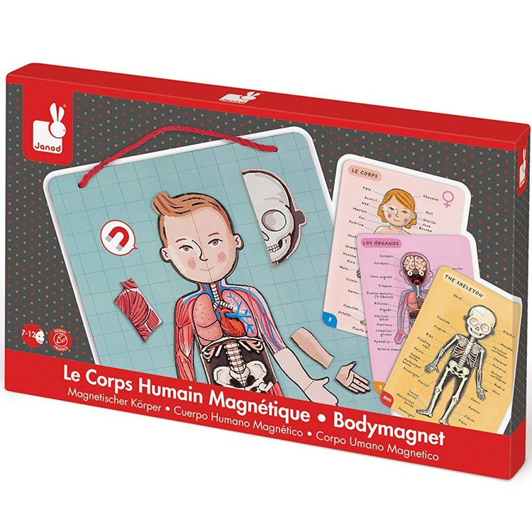 Body Magnet Human Body Multilingual Learning Set ...