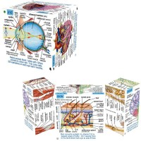 Human Body Systems & Statistics Fold-Out Cube Book