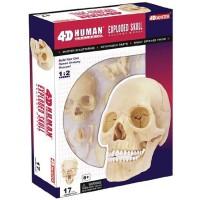 4D Human Exploded Skull Anatomy Model
