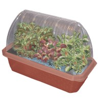 Fly Trap Fiends Windowsill Greenhouse Plant Kit