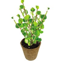Grow Your Own Apple Tree Plant Kit