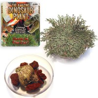 Dinosaur Plant Amazing Water Plant Kit